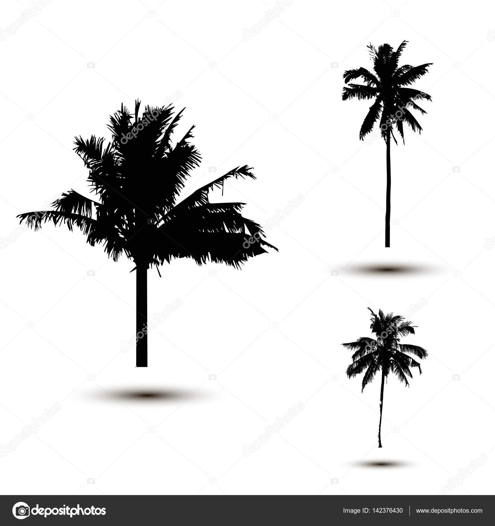 Realistic SilhouetteTropical Coconut Palm Tree Black Silhouettes