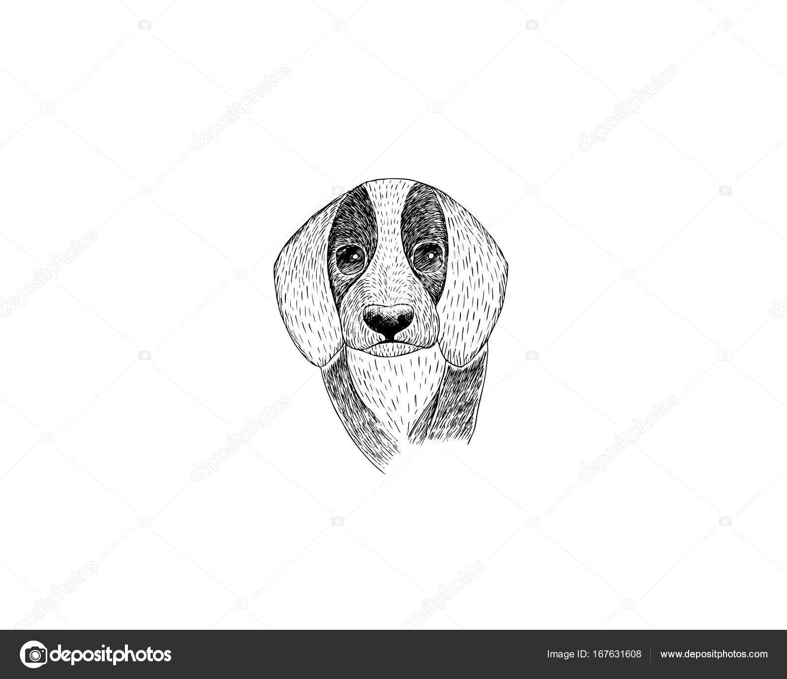 Dibujos A Carboncillo Para Imprimir Dibujo Ilustración De Beagle