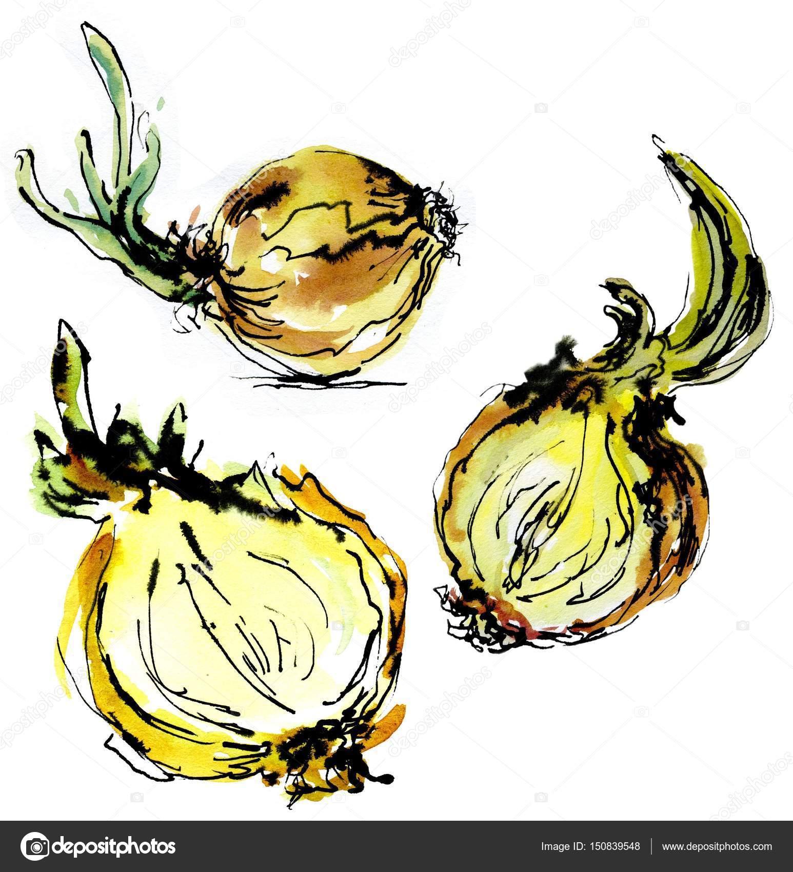 水彩食べ物クリップアート野菜の水彩セットです分離手描き玉ねぎ