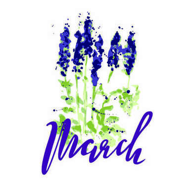 Vector illustration of wildflowers, painting lupines on a white background