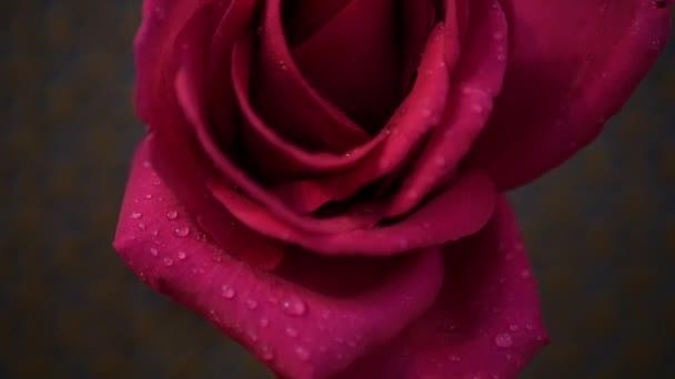 nagy Rózsa
