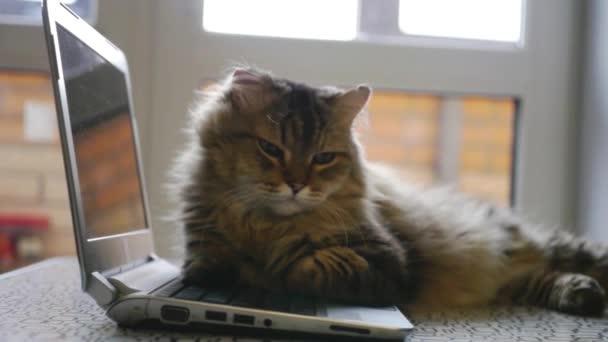 pěkný načechraný kočka ležící na otevřený zápisník. 1920 × 1080