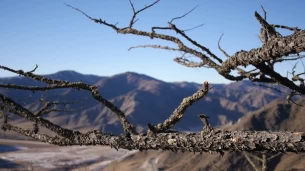 Un Vecchio Asciutto Grande Albero Sulla Cima Di Una Montagna Sullo