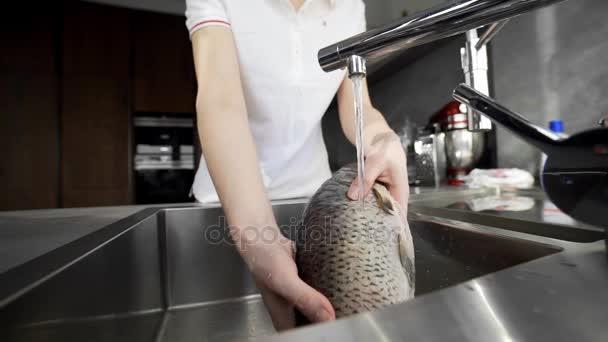 Картинки: ресторан, блюдо, пища, устрица, морепродукты, рыба.