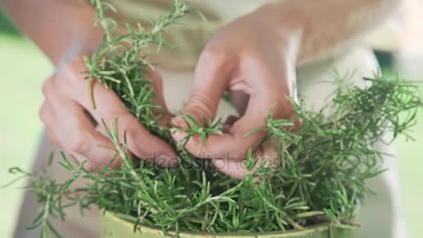 The cook rips off the fresh thyme for spicing the dish, fresh greens from own garden, cooking outdoors, spicy food and meals