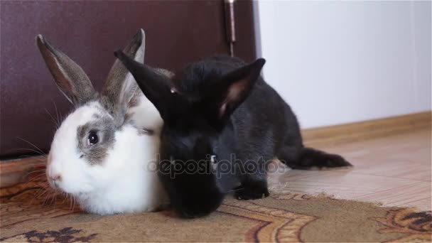 Baby rabbits sitting together