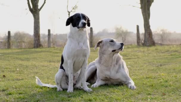 Zwei Hunde, die auf einer Wiese sitzen. Sie sind allein verloren