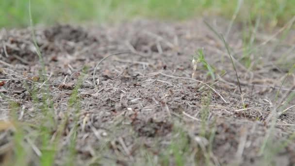 mravenci, kteří lezou v mraveništi přes lehkou texturu dřeva