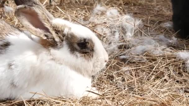 colorful rabbits on a farm. domestic animals in contact zoo. 4K