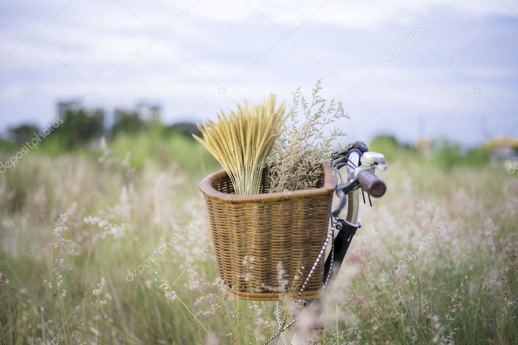 Bicycle with basket and guitar of flowers in meadow, select and soft focus