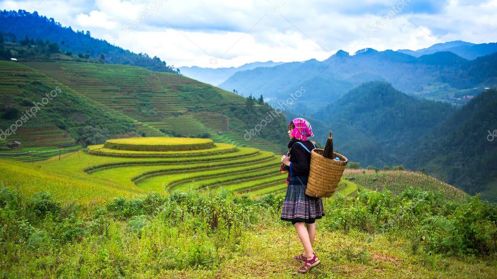 Rice fields on terraced of Mu Cang Chai, YenBai, Rice fields prepare the harvest at Northwest Vietnam