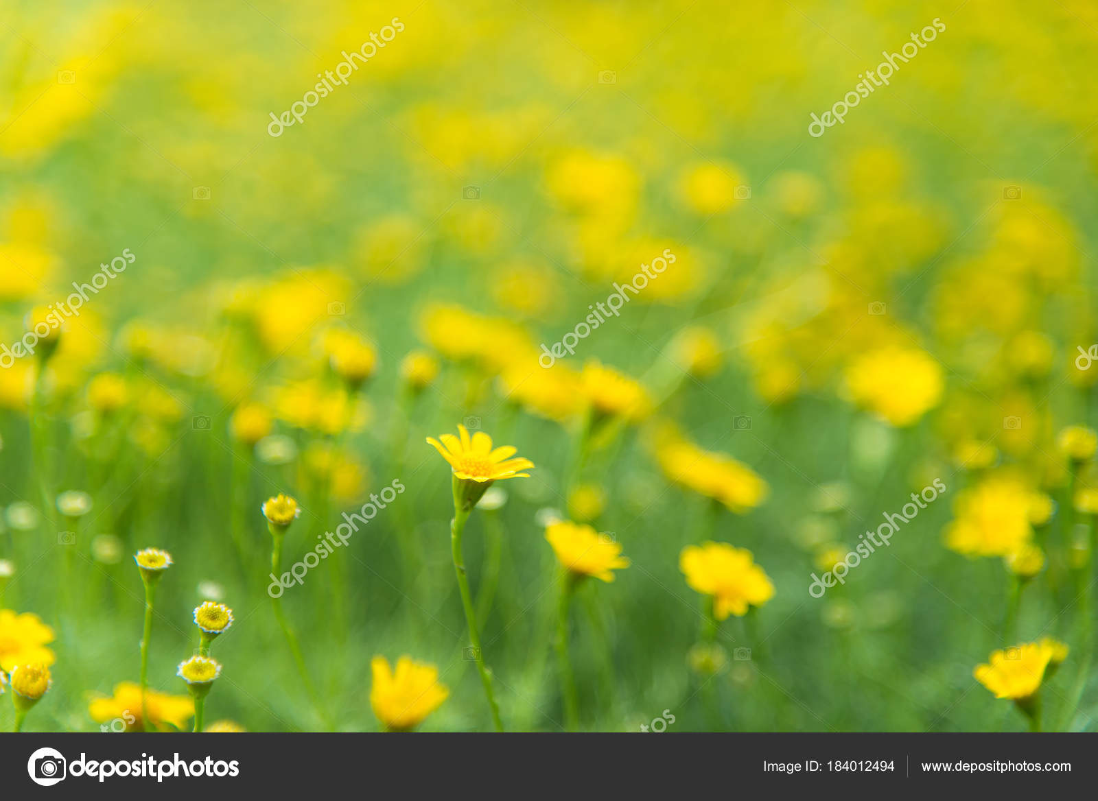 Фото зеленые листья желтые цветы