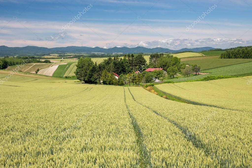 Fields landscape in Japan