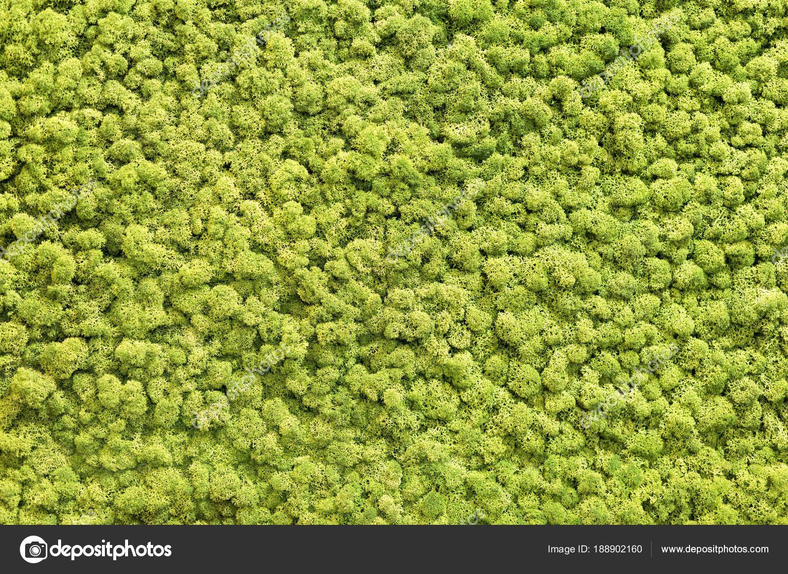 Mur De Mousse Verte Artificielle Pour Décor De Jardin Texture De