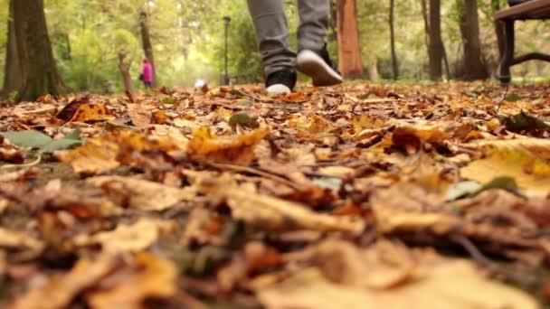 Nohou tenisky na podzim listy v přírodě s přírodou sezóny podzim na pozadí životní styl módní trendy styl