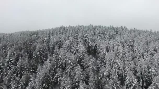 Snow winter season. trees forest woods. beautiful nature. fly over. aerial view.