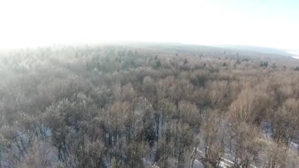 Flug über die von Nadelwald bedeckten Berge an einem sonnigen Wintertag.