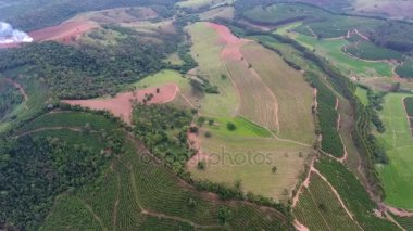 Coffee plantation, Brazil. Aerial