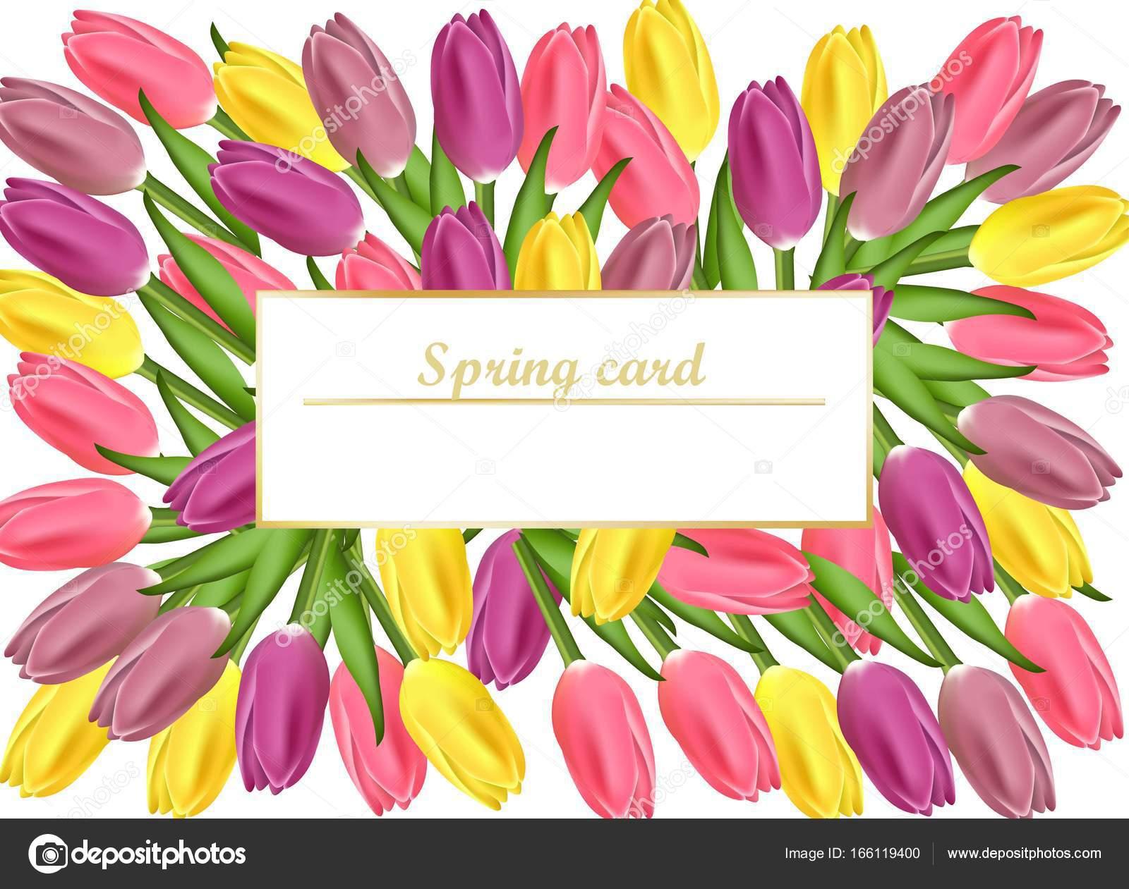Tulpen Kaart Vectorillustratie Realistische Bloemen Voor De Dag Van
