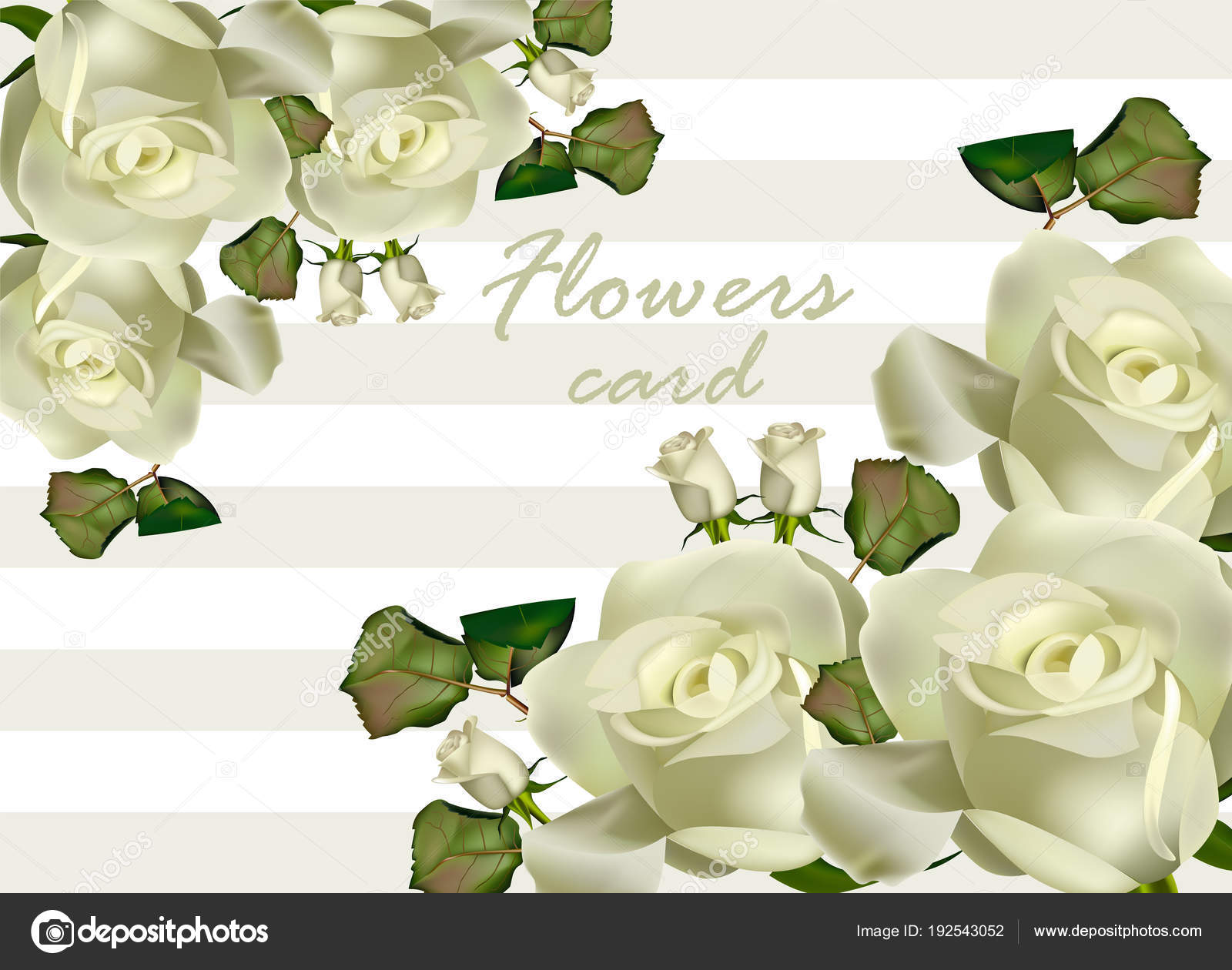 White Roses Flowers Card Vector Realistic Beautiful Floral
