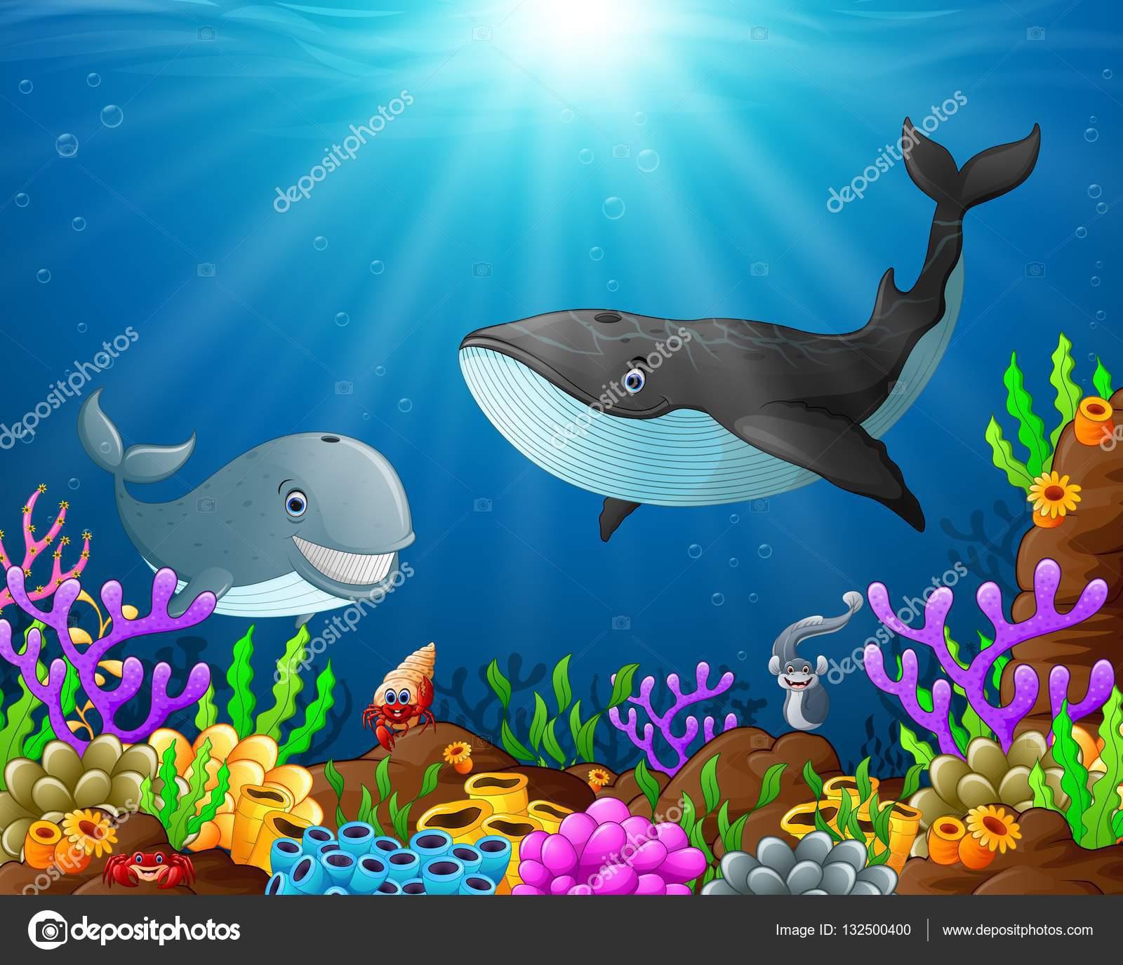 Tubarão-desenhos Animados E Baleia No Fundo Do Mar