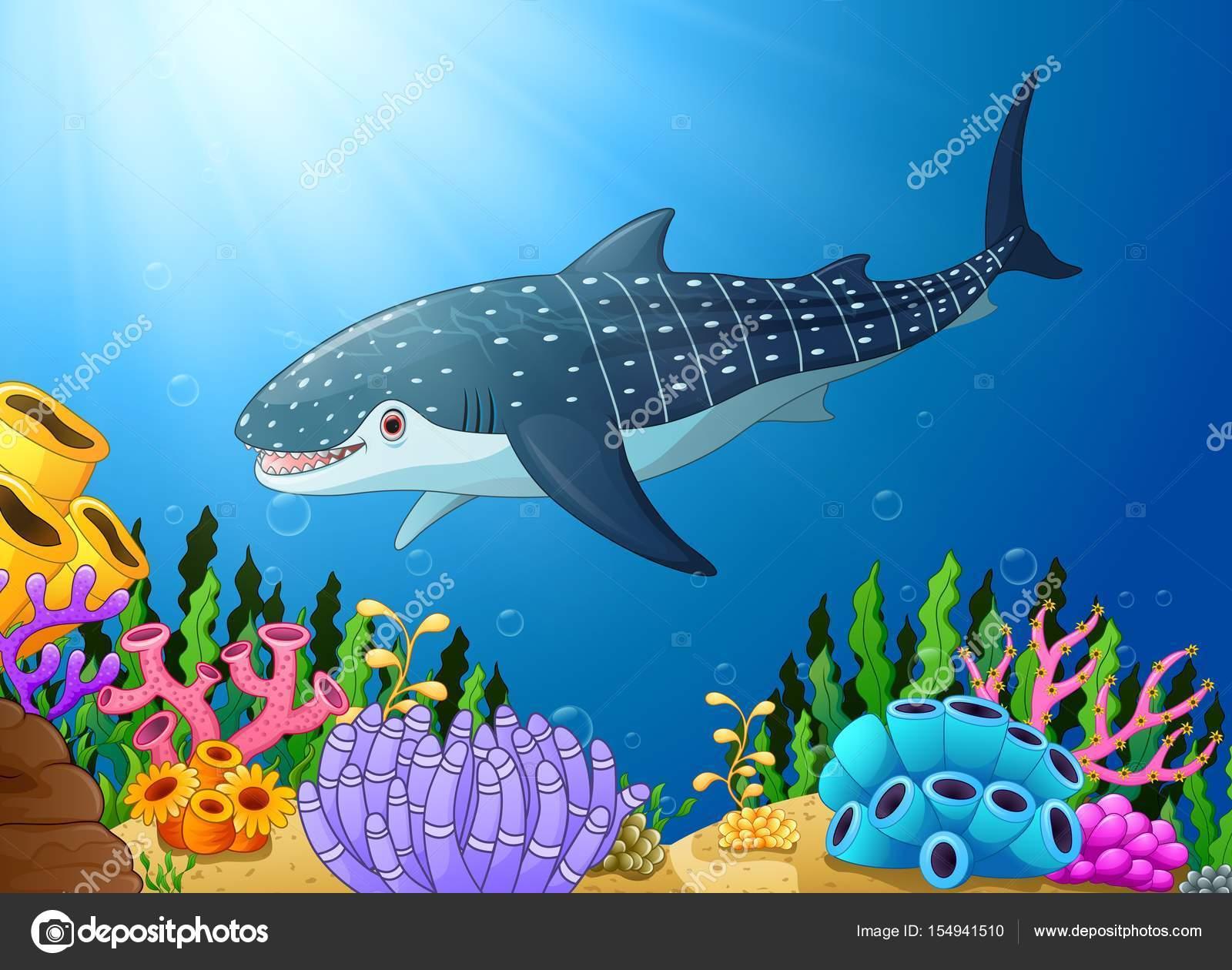 Requin baleine dessin anim dans la mer image - Requin baleine dessin ...
