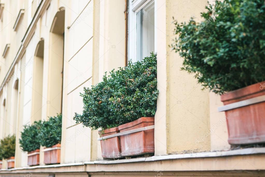 Esterni fioriere con piante decorative sul davanzale for Piante decorative