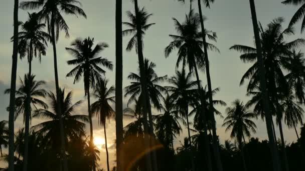 Krajina při západu slunce s tropickými palmami