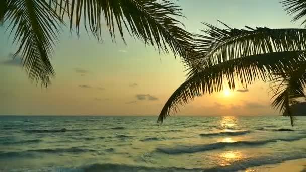 Blick auf den Sonnenuntergang der Wellen des Meeres, Palmen und dramatischer Himmel