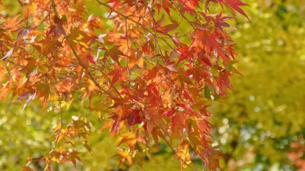 branches with red autumn foliage