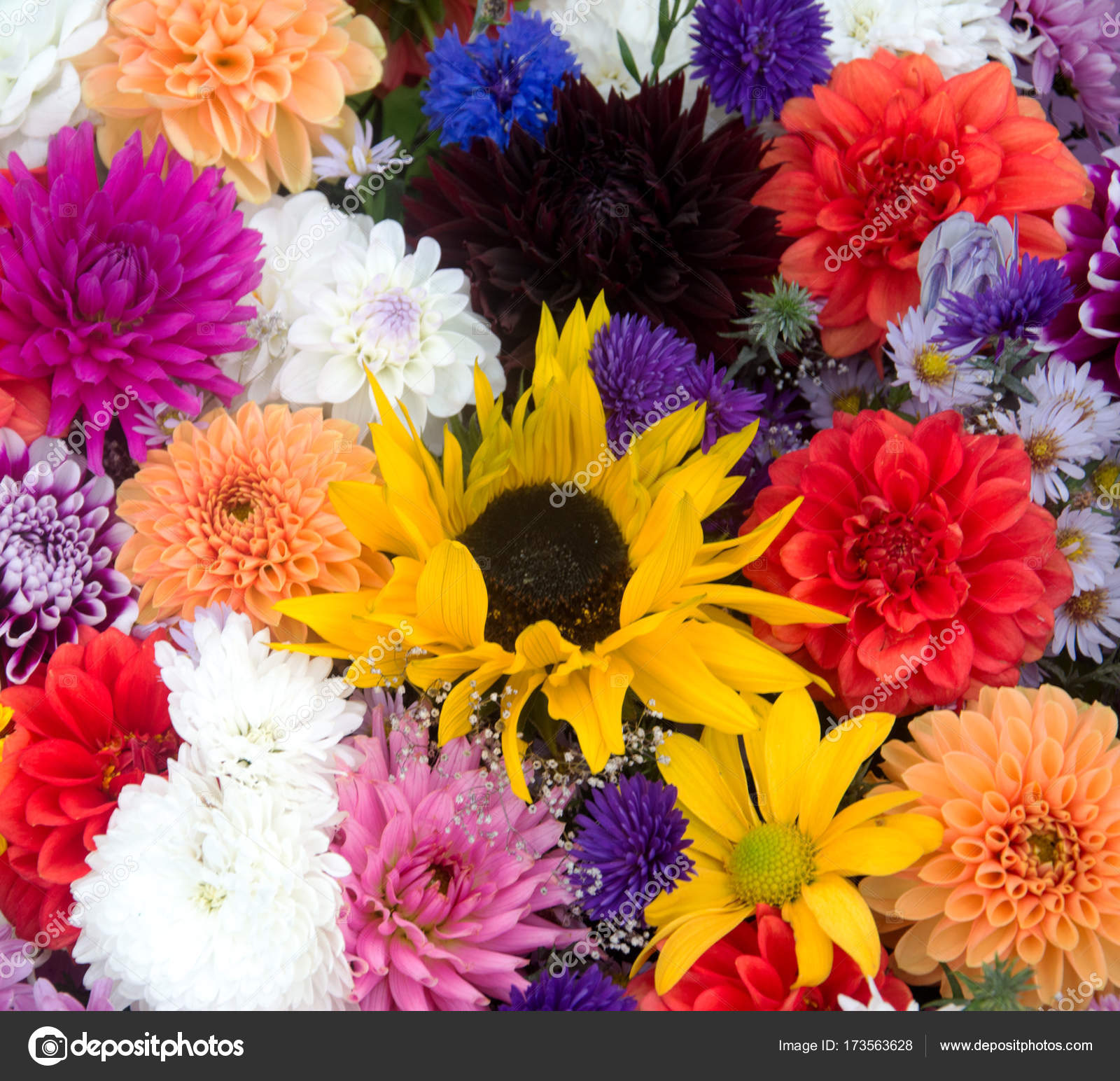 Multicolored spring flowers closeup bunch of colorful flowers or multicolored spring flowers closeup bunch of colorful flowers or flower bouquet with various flowers izmirmasajfo
