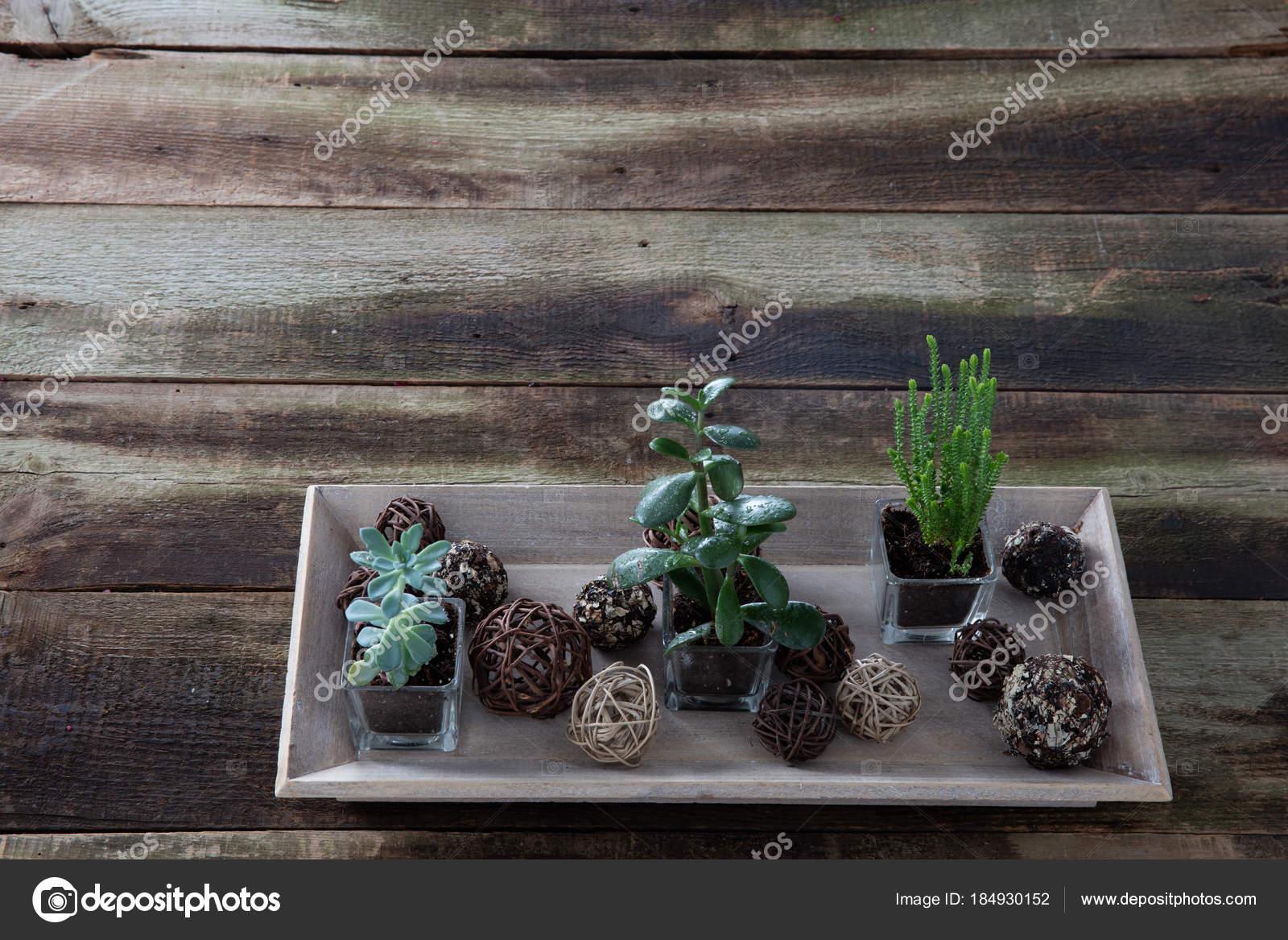plantes dans un bac en bois pour intérieur concept jardin et