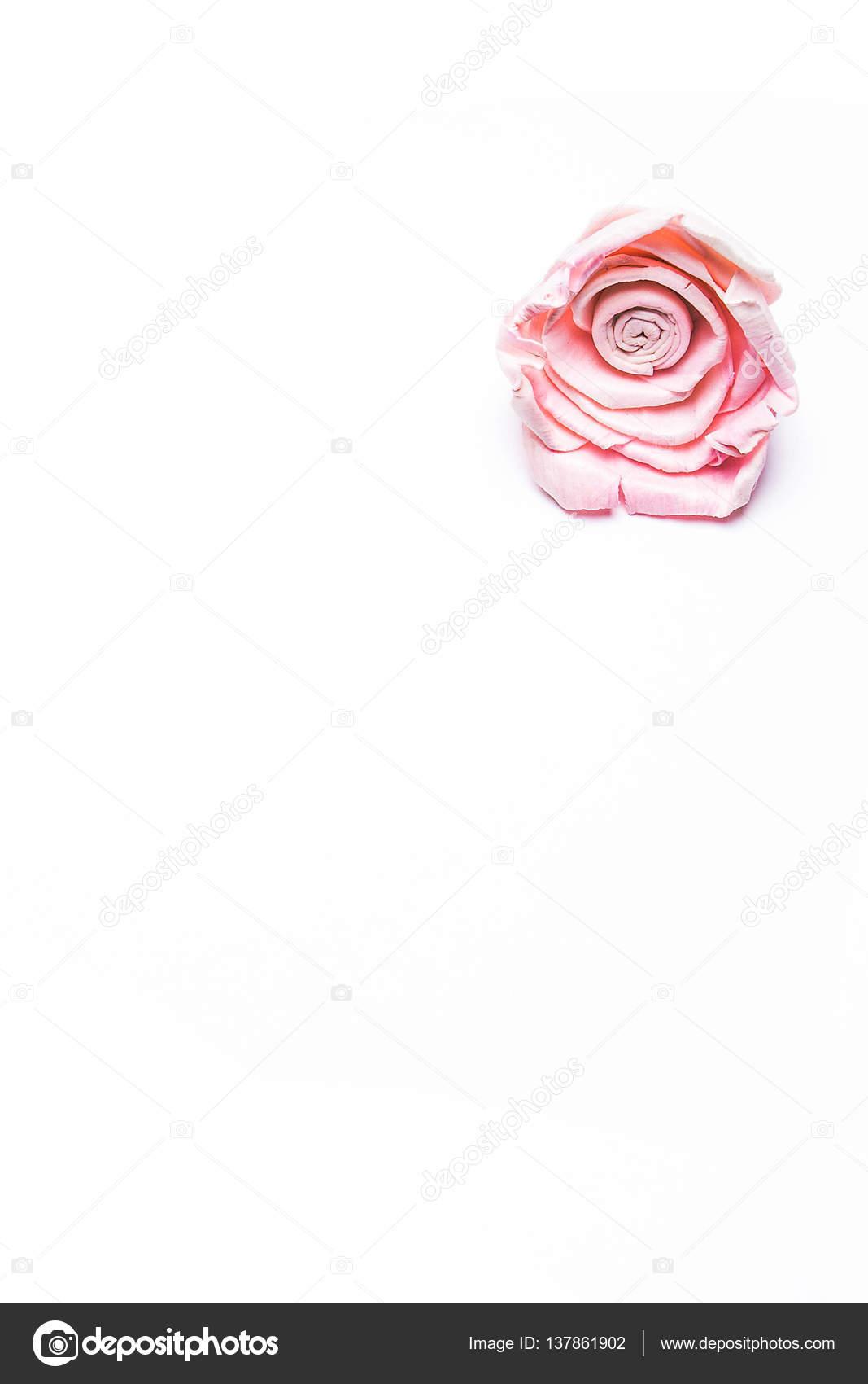 March 8 pink flowers on a white background stock photo march 8 pink flowers on a white background photo by olesyakatkovast mightylinksfo