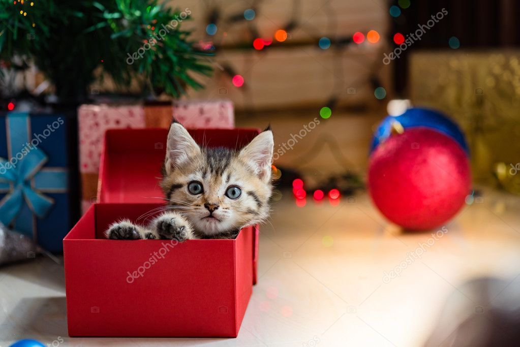 Cute kitten in christmas. — Stock Photo © Ztranger #126268810