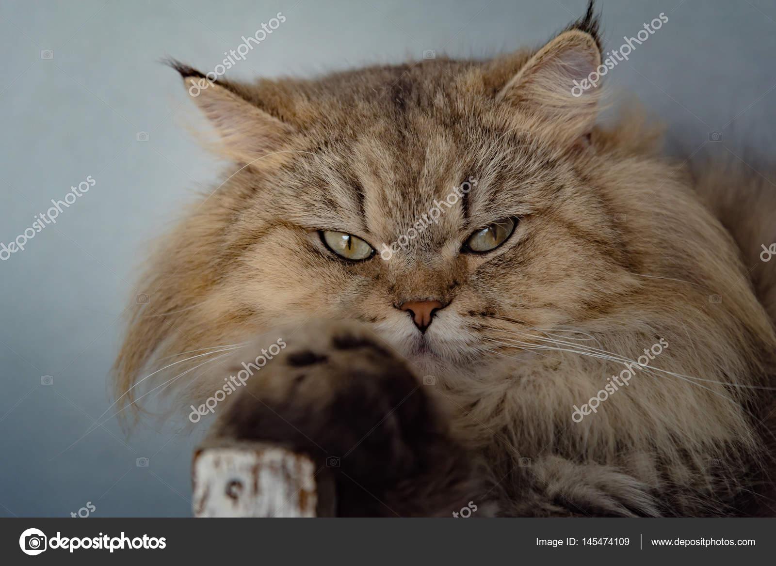 zblízka velká kočička