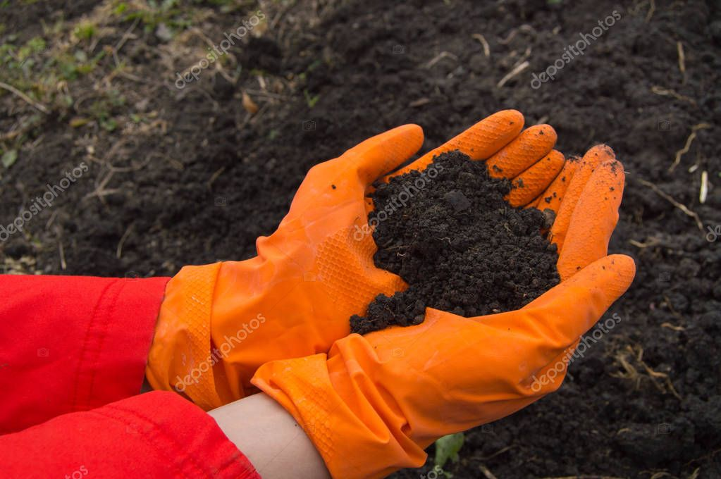 hands, who wears orange rubber gloves with the soil background