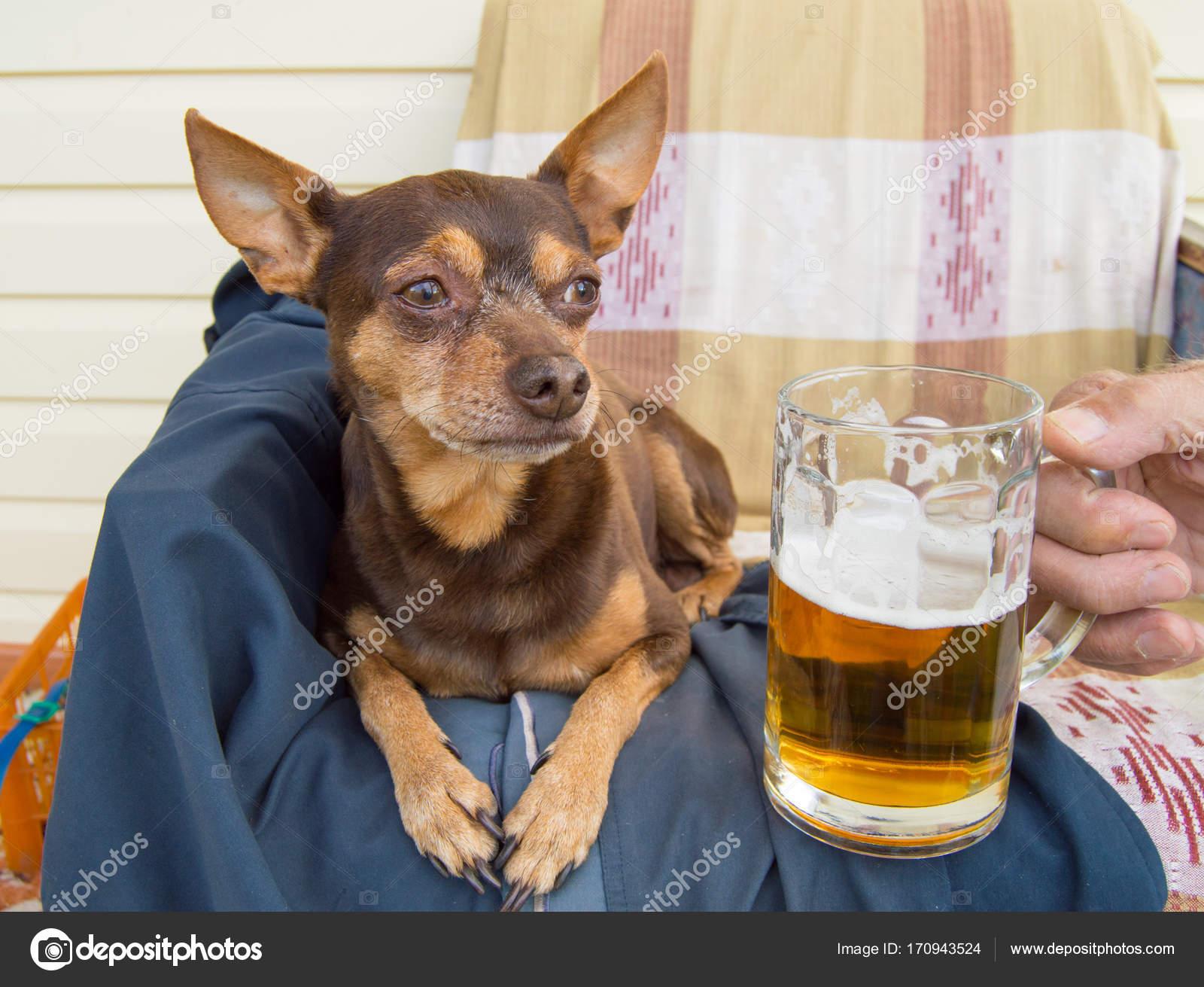 Super Grappige schattige hond met een biertje, die haar eigenaar biedt @OM53