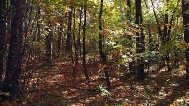 V lese mezi listy