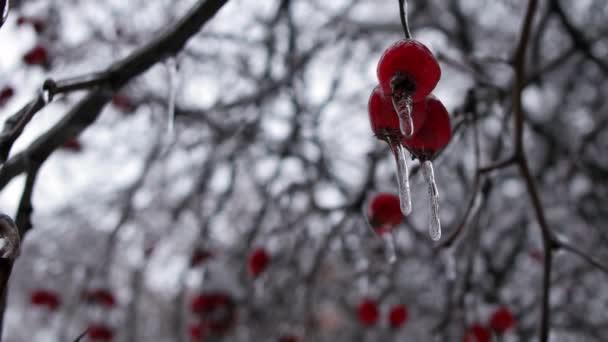 Winterwald an Weihnachten