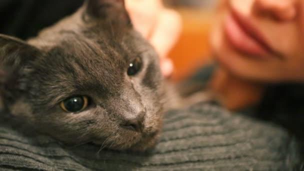Nő, és a macska. Heves morcos fajtiszta macska. Vicces háziállatok. A macska szeme közelről.