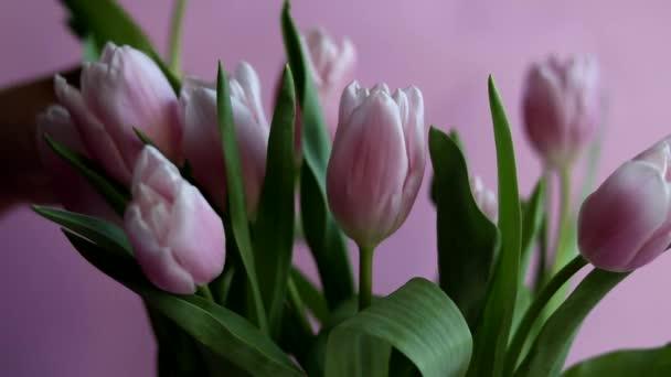 Kytice růžových tulipánů na svátky. Den žen, Valentýn, den jména. Na růžovém pozadí. Kopírovat prostor