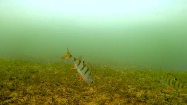 Podvodní natáčení ryb