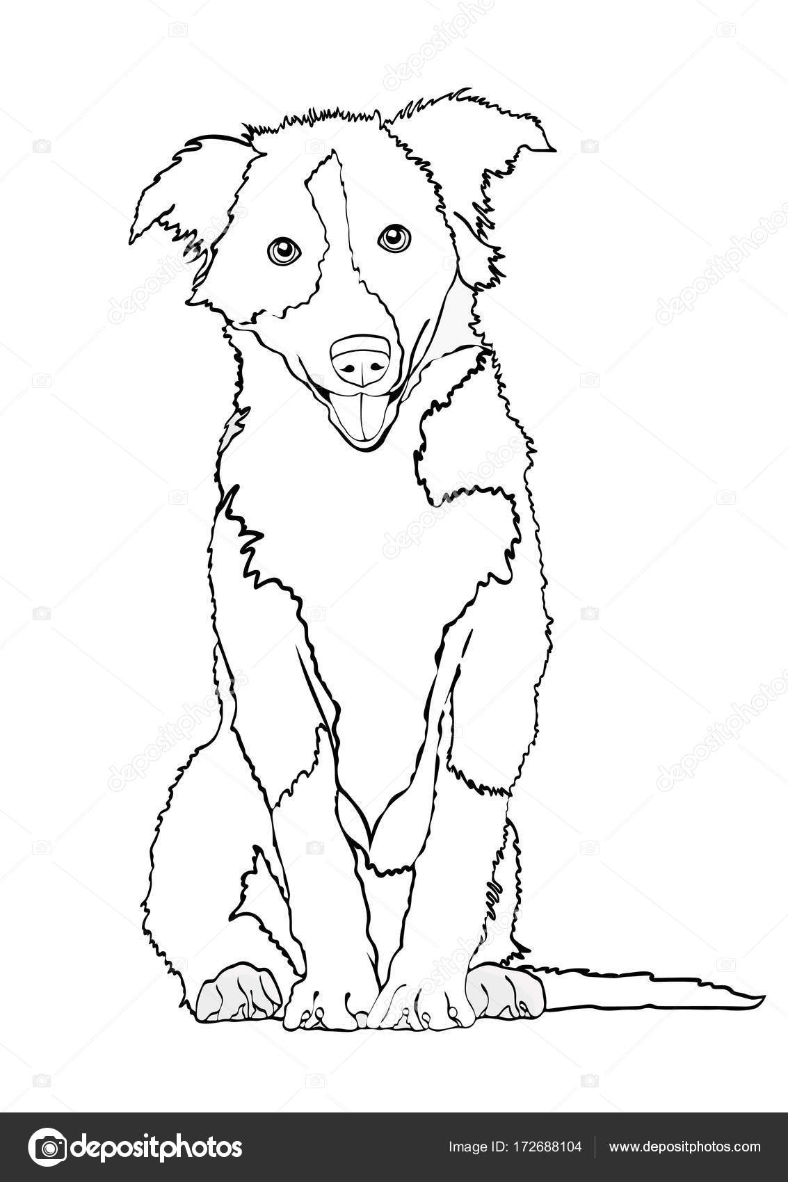 Dog Outline Drawing Dog Vector Outline Drawing Sketch Coloring Book Black And White Contour Cartoon Shaggy Dog Full Length Isolated On White Background Stock Vector C Eva Che 172688104