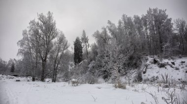 Landscape in a mountain forest on a winter morning.