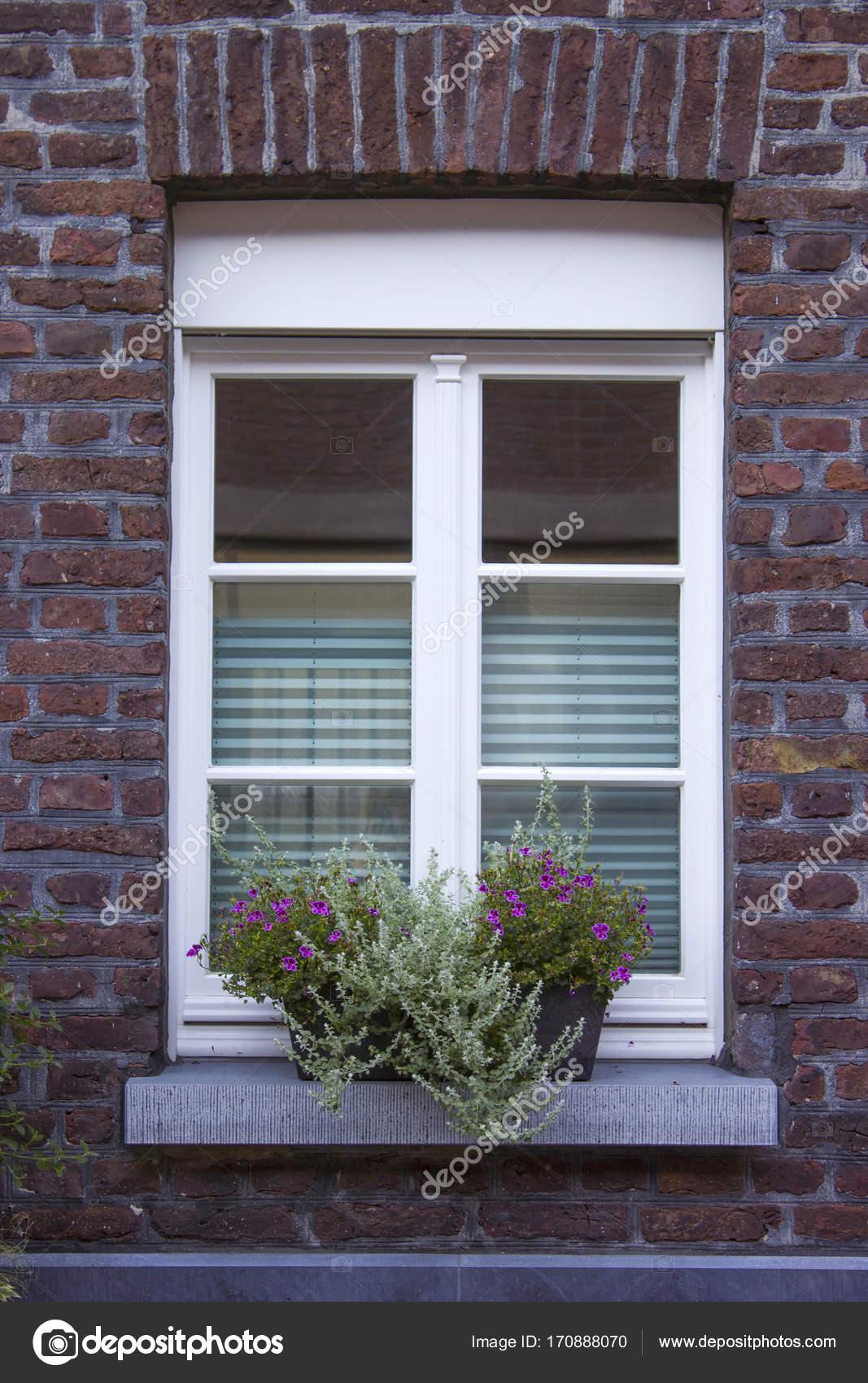 Wand mit Fenstern und Blumenkästen mit blühenden Pflanzen ...