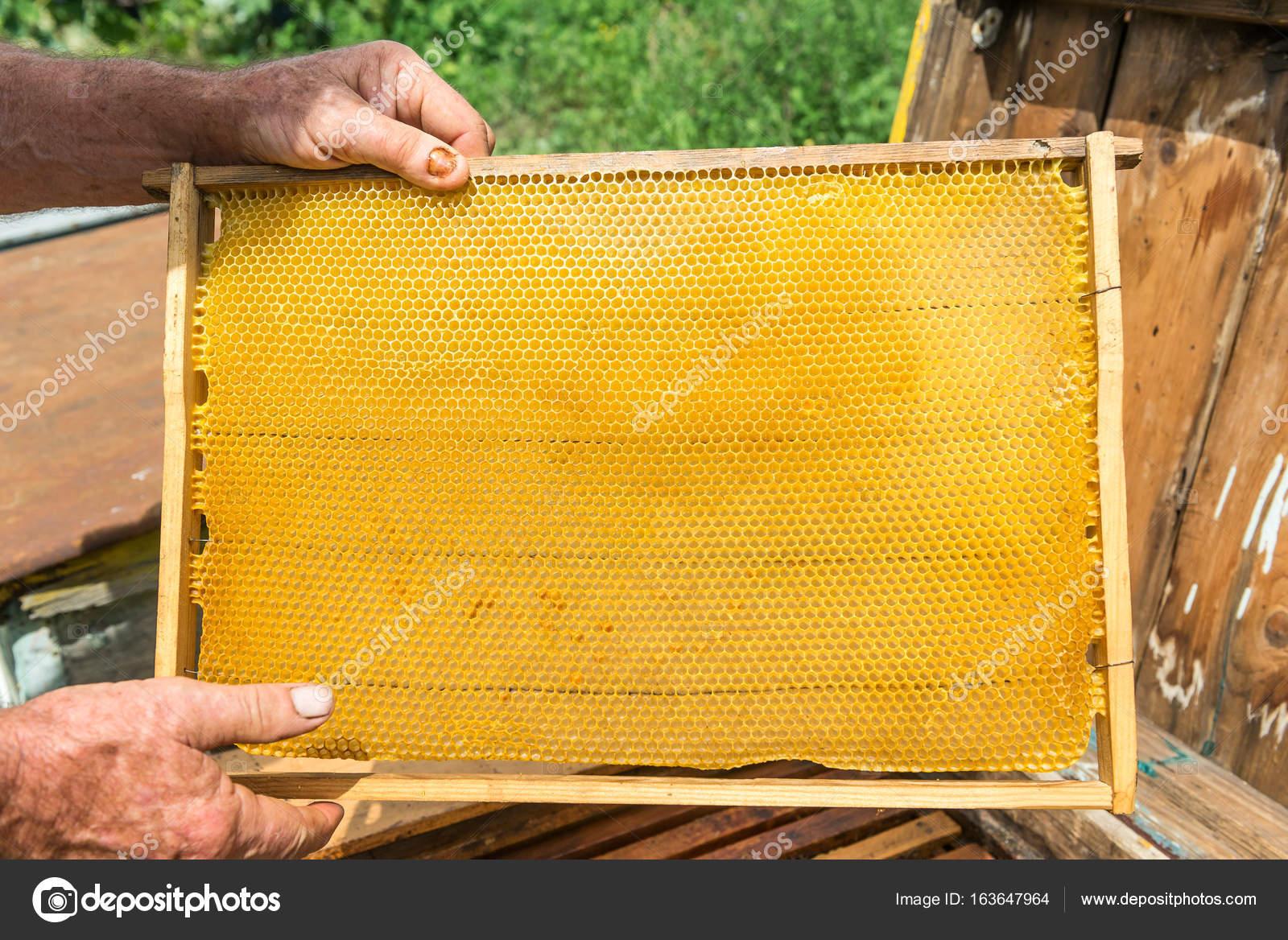 Instalación de marcos con panales en la colmena. Trabajo de ...