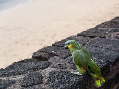 Side portrait of a parrot on sandy beach background