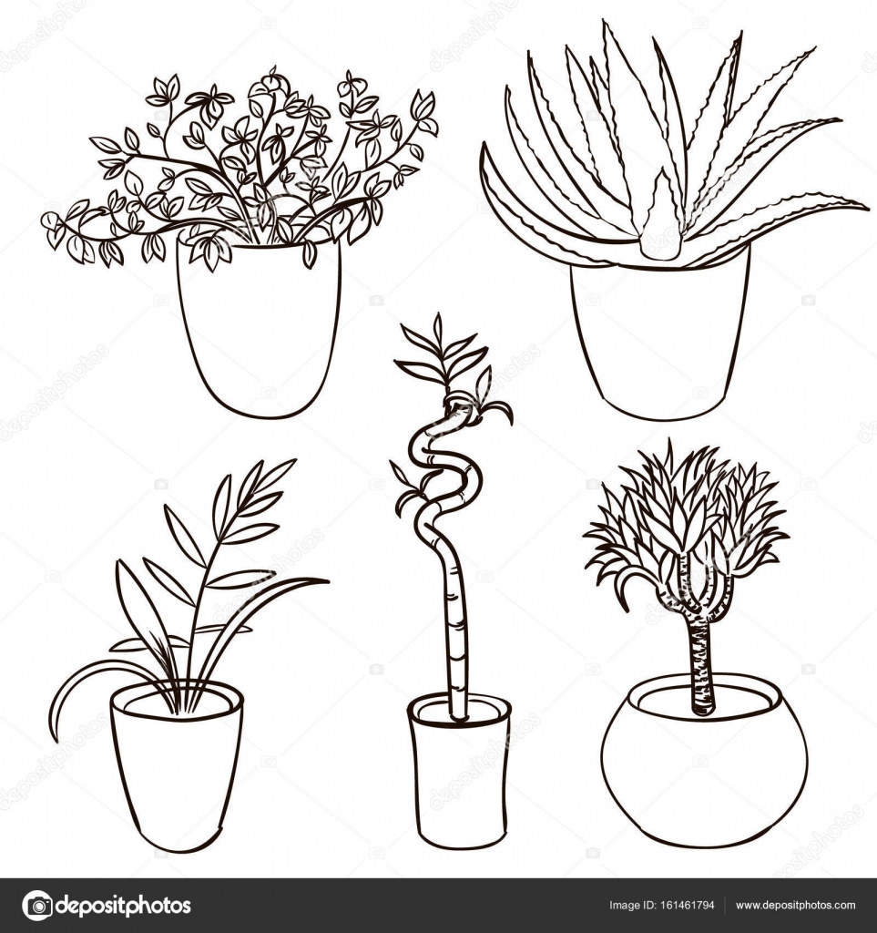 Set of house plant isolated. Vector sketch house plant pot ...