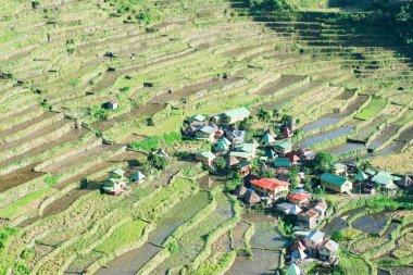 Batad Rice terraces, Banaue, Ifugao, Philippines.