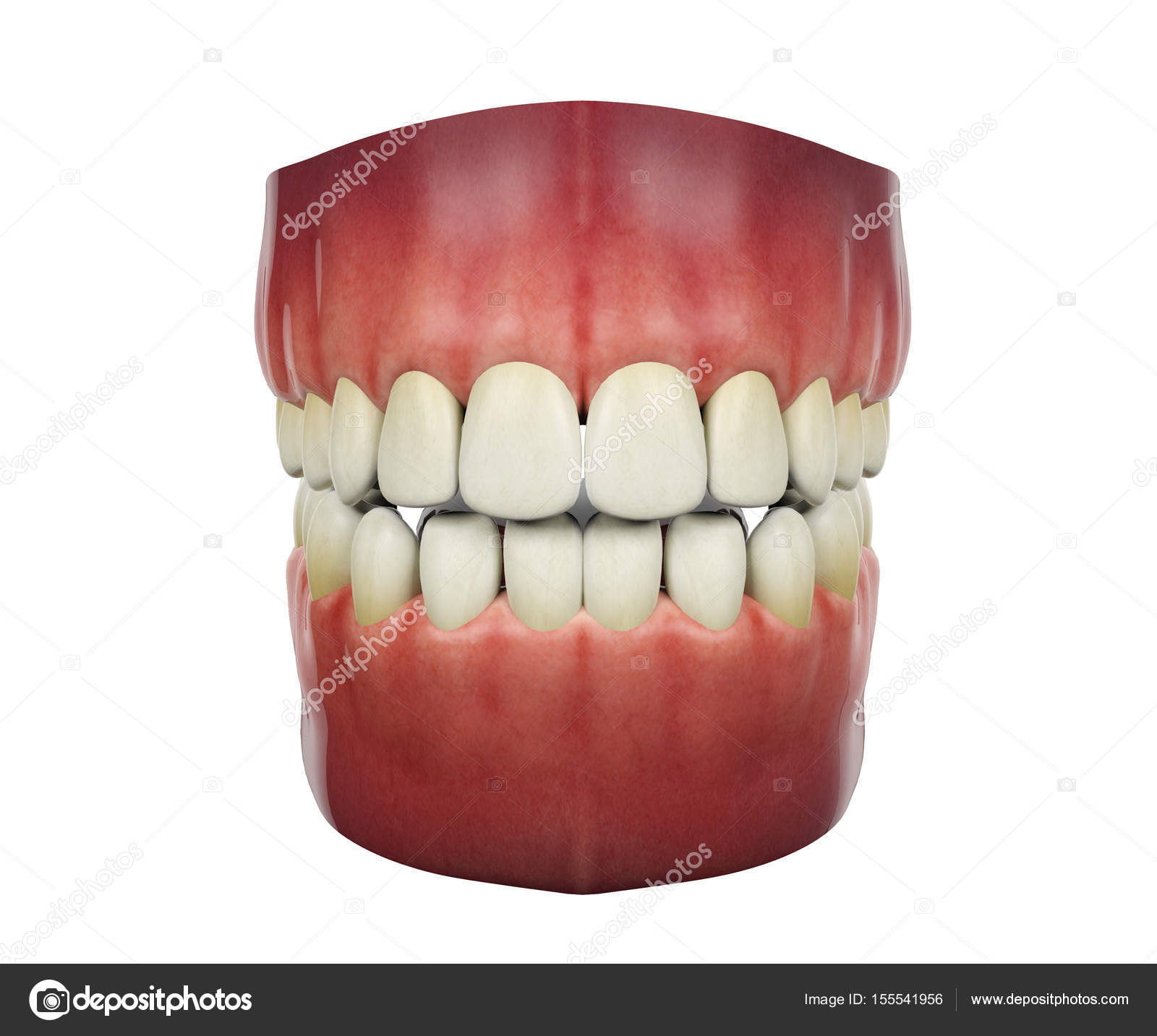 Human Teeth Isolated On White Background 3d Rendering Stock Photo